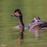 les-oiseaux-de-la-mongolie12