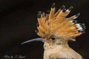 les-oiseaux-de-la-mongolie7