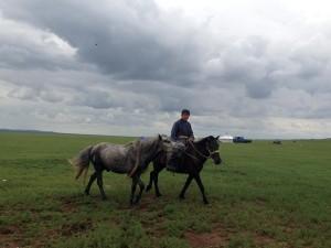 Circuit-de-la-fete-Naadam-2015-en-mongolie4