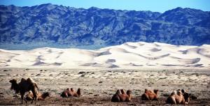 Eco voyage en mongolie - Gobi desert