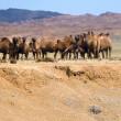 L'espace Transmongolien du Gobi à vallée de la rivière Kharaa