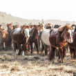 Le fêstival des milles chevaux dans la steppe mongole